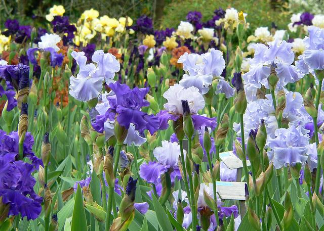 Firenze - Giardino degli Iris 2